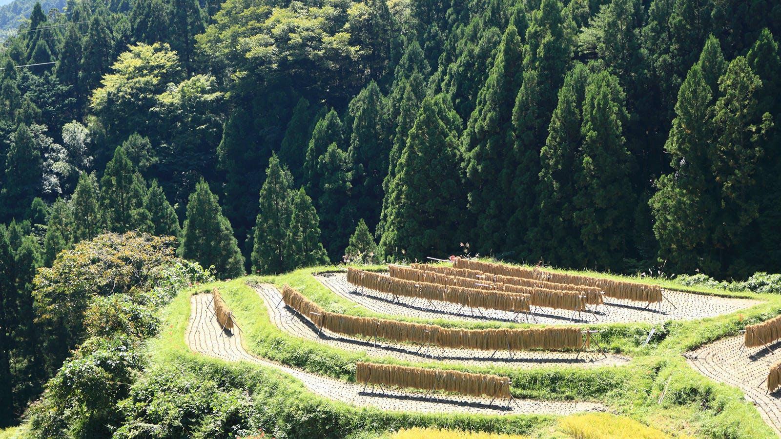 徳島県上勝町