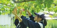 """ユネスコ無形文化遺産が伝わる花巻市大迫地域で""""日本一礼儀正しい学校""""を一緒に作りましょう。「高校生おおはさま留学生」を募集します。"""