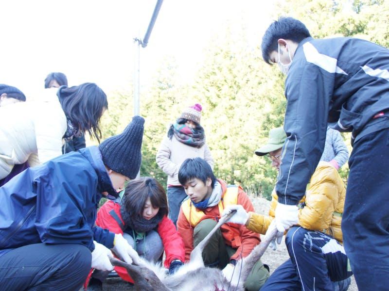 """シカを捕って、さばいて、食べる 狩猟体験ツアー""""春の罠祭り編""""を開催します"""