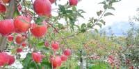 【起業家募集】日本一のりんご産業を未来に。弘前で新たなりんごビジネスをつくる!