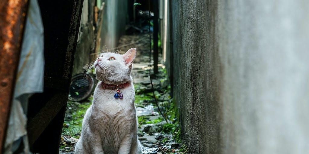 湖南市はコニャン市!?職員は保護猫のこにゃん市役所を作ります!