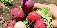 長野県で農業体験をしましょう!親子で野菜作り、週末農業でリフレッシュしたい人!初心者さん大歓迎!