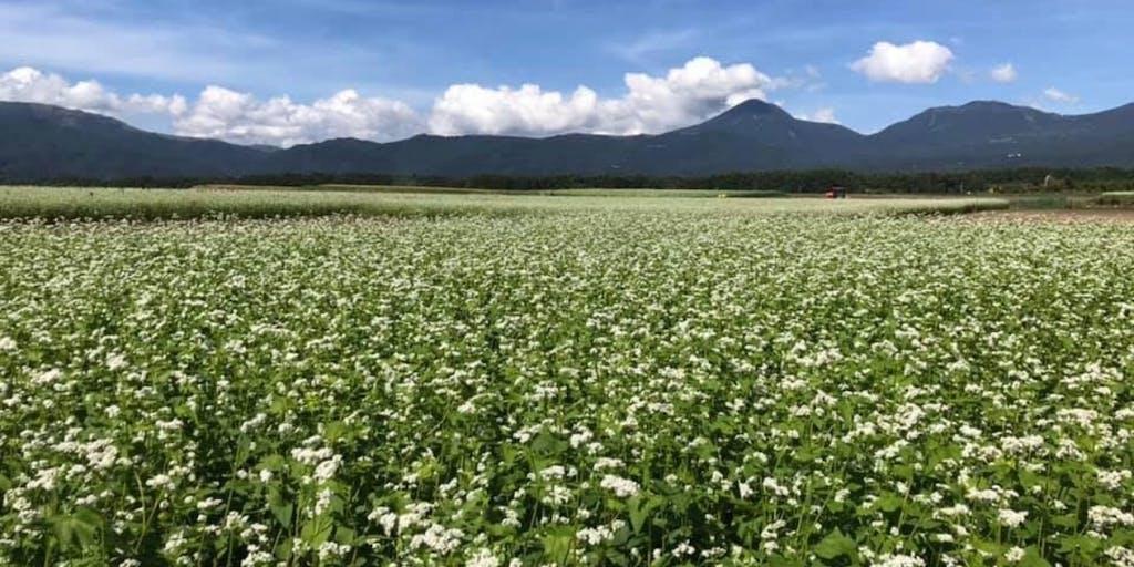 \八ヶ岳西麓 そば畑サポーター制度2020/そば農家さんと一緒に地域の風景を作りませんか? ー 長野県茅野市 ー