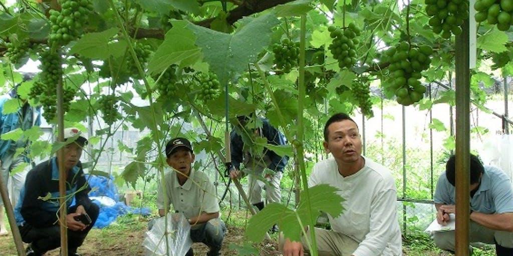 【7/19〆地域おこし協力隊募集】環境に配慮した栽培を行う「豊岡ぶどう」の園地継承を目指しませんか?