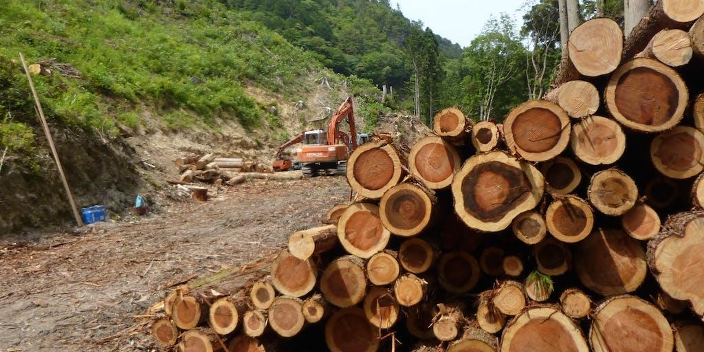 【地域おこし協力隊募集】林業に興味のある方、四国山脈は資源の宝庫です!!