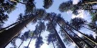 大自然が広がる人口3,300人の小さなまち、山口県・阿武町で「ローカルに貢献できる林業作業員」を募集!