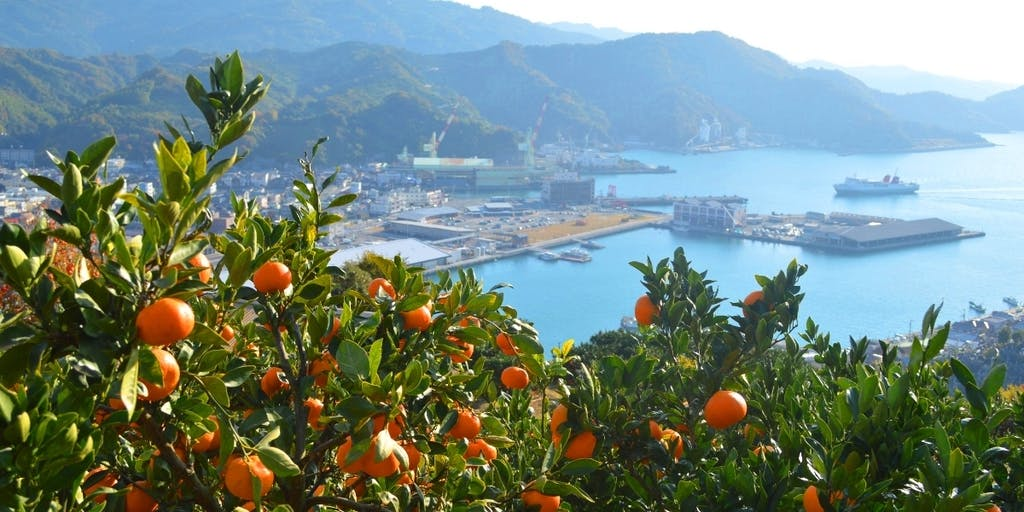「八幡浜市を元気にしたい!新しいことをやってみたい!」愛媛県八幡浜(やわたはま)市で一緒に頑張ってくれる地域おこし協力隊員を募集します!