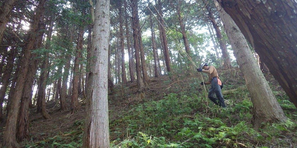 【2人以上での申し込みも歓迎!】森林と暮らす養父市地域おこし協力隊募集!