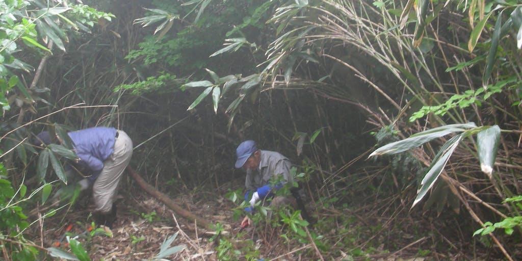 奥能登・鉢伏山のブナの森再生に参加されませんか
