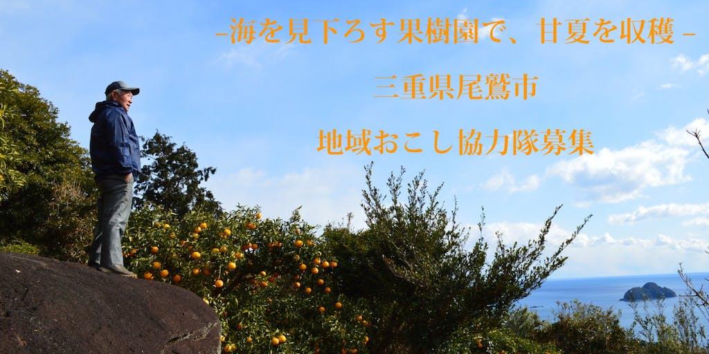三重県尾鷲市「地域おこし協力隊募集」海が見える丘でみかん農家になろう!