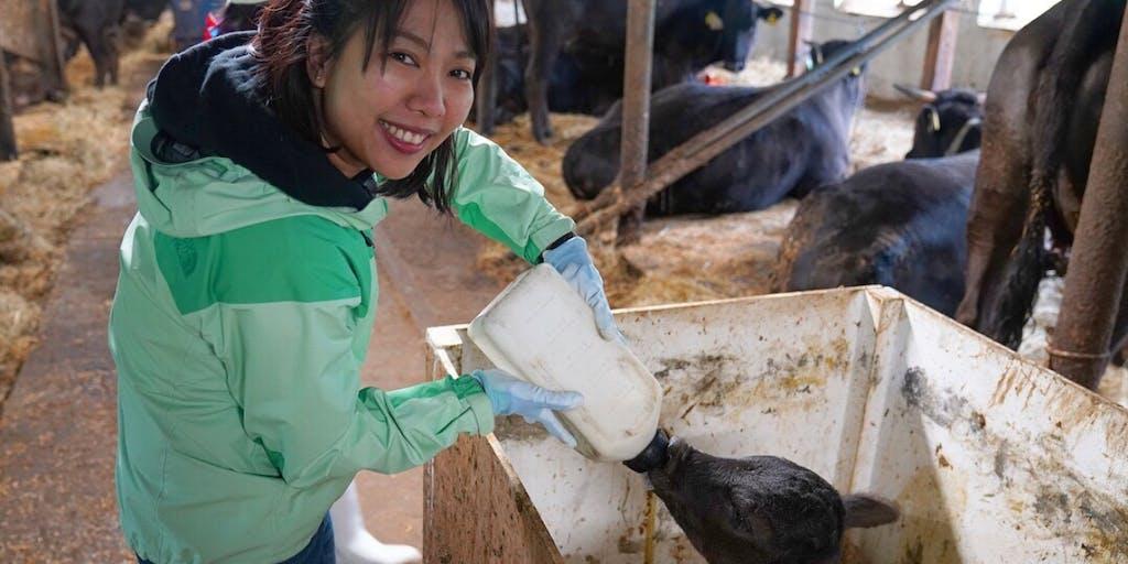 北海道酪農発祥の地八雲町で大規模&小規模農場での本格酪農研修