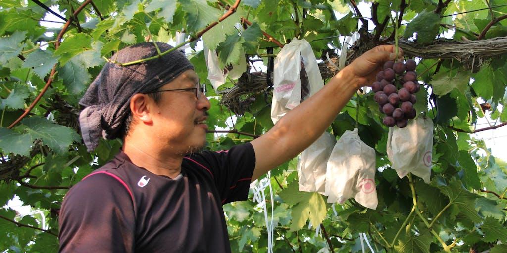 \10/31〆地域おこし協力隊/人と環境にやさしい農法で作られる「豊岡ぶどう」生産者として、ブランドを守り、盛り上げてくれる仲間を募集!