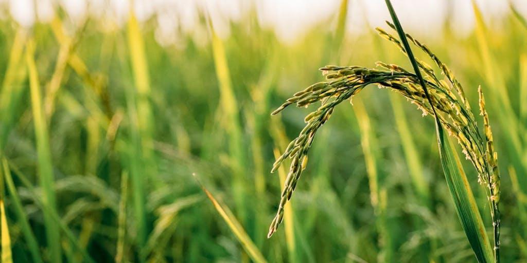 【地域おこし協力隊募集】農業×民泊・食育で次世代へつなげる持続可能な里山の暮らし