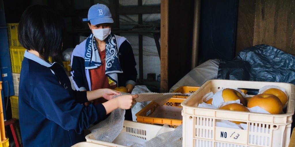 【トビラプロジェクト】新潟市南区の農家さんの魅力を新潟市の学生が知り、発信!発信のおてつだいをしてくれるサポーター募集!