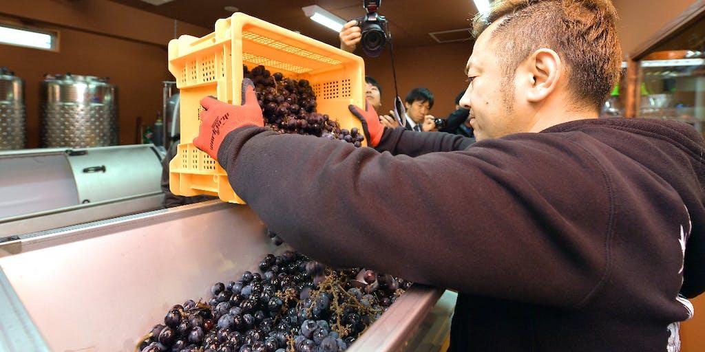 ワイン産業の振興と地域活性化に取り組む人材を募集します!【八戸市地域おこし協力隊員募集!!】