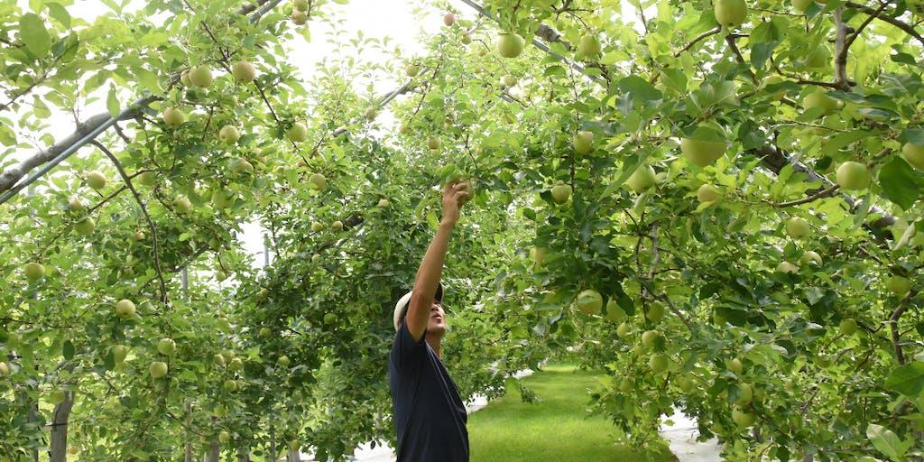就農を目指す人と、日本一のりんご生産地・弘前市の栽培技術を継承したい!
