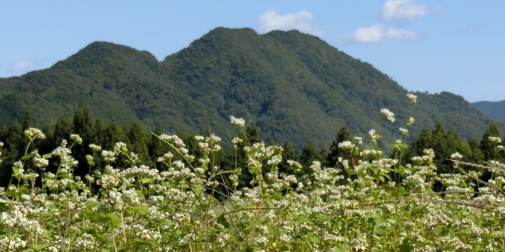 大自然の中「有機農業・自然農法」も良し!農業体験で観光ツアーを企画・実施する人募集