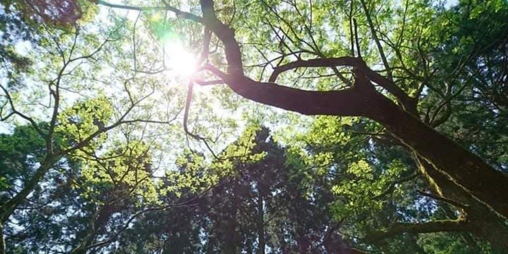 森林は癒しのエキスパート【森林セラピー(R)】