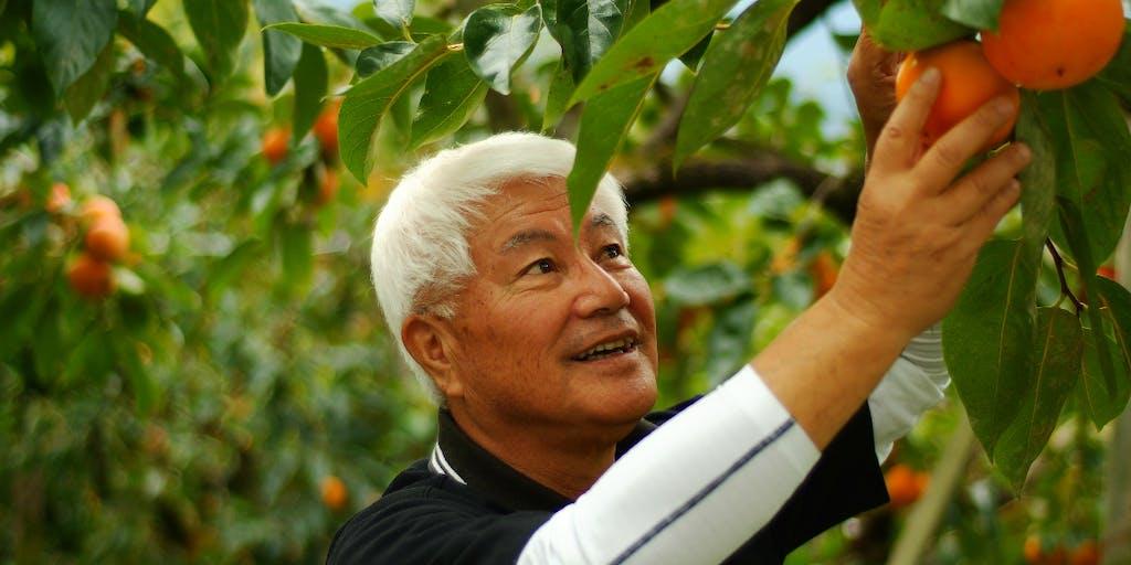 【Uターン、Iターン大歓迎!】\新規事業です/ 梅と柿の産地・奈良五條〜奥大和エリアの地域活性化プロジェクトに取り組むメンバーを募集します!