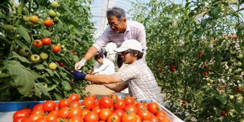 ふくい園芸カレッジ研修生募集中!!福井県で農業、独立就農を目指しませんか