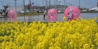 【菜の花キャンプで週末移住体験】三川町の花・菜の花を見ながら、ゆるりと過ごす。語らいながら、お祭りを楽しみながら、非日常を味わうー。