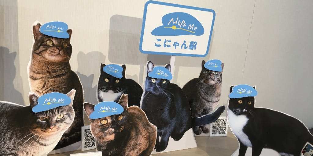 【Animal Welfare】動物にも人にも優しいまちづくり こにゃん市事業開発プロジェクト