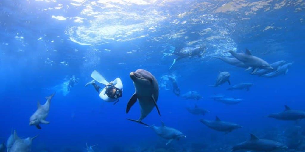 イルカと泳げる島(in東京都)で、宿の運営をやってみたい人を募集! ★2人での応募も歓迎★