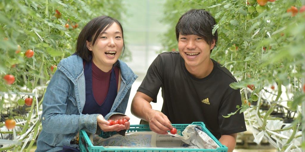 【協力隊募集】目指すは「農業で村を興す」。Uターンした20代のトマト農家とともに「おもしろい農業」を一緒に作るメンバー募集