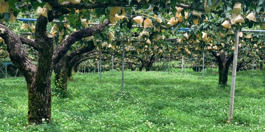 梨が好きすぎて梨農家になった木村さんと本気の収穫作業と空き家探訪