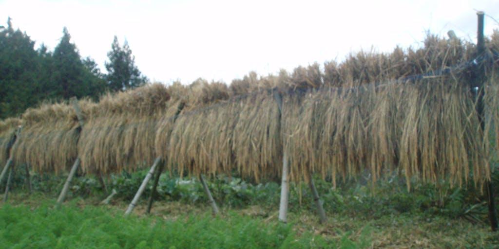 田舎で自給自足しながら農的コミュニティーづくり