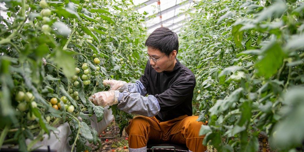 【地域おこし協力隊】秘境de農業 未経験者でも就農までサポートします!