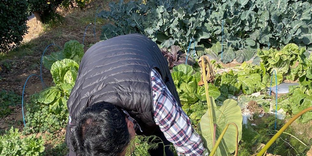 埼玉県ときがわ町二拠点生活シェアハウスで農業体験をする
