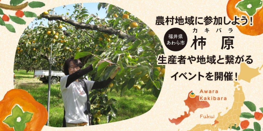 【福井県あわら市】農村地域の柿農家さんと交流してみませんか?