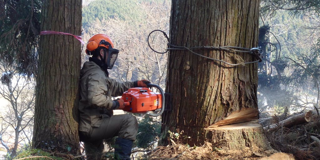 地域おこし協力隊を活用した、林業担い手を募集します