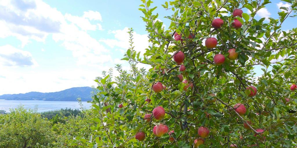 【地域おこし協力隊募集】「小さくても、強い産地へ!!」米崎りんごを通じて活き活きとした地域づくりに参加してみませんか?