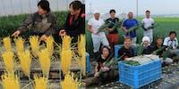 《地域おこし協力隊の募集》日本初の産金地・涌谷町で、農業の匠とともに、農業の活性化に挑戦する仲間となる地域おこし協力隊を募集!