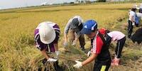 農泊事業にチャレンジ! 農と観光を結ぶ取り組みをお手伝いください