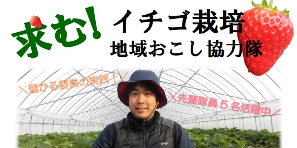 【急募】とっておきの一粒をあなたと イチゴ栽培地域おこし協力隊募集