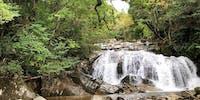森林セラピーやトレッキングイベントを通して智頭町の自然に癒されませんか?