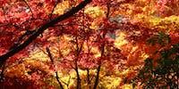 秋の西山公園インスタグラムフォトコンテスト2019開催!紅葉をみに鯖江に来ませんか?