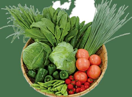 栄養たっぷりな有機野菜が豊富にあります。