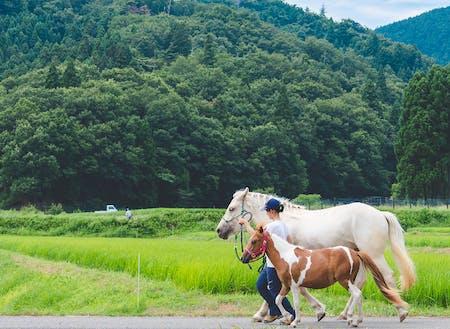 現役隊員さん(馬と一緒にゆっくりと集落をお散歩)