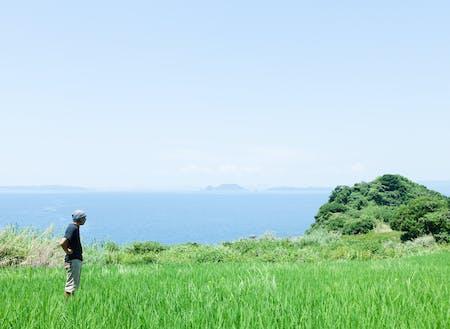 潮風が渡る半島の田んぼで
