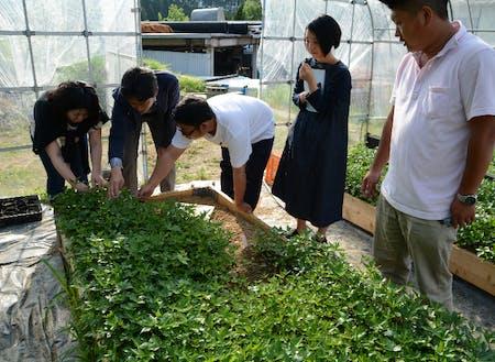 奈良の薬草農家さんを訪ねた時の様子