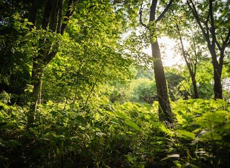 伊那市は82%が森林で囲まれており、自然と共生しながら暮らす。