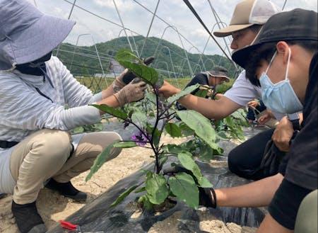 有機農業の技術を真剣に学ぶ受講生