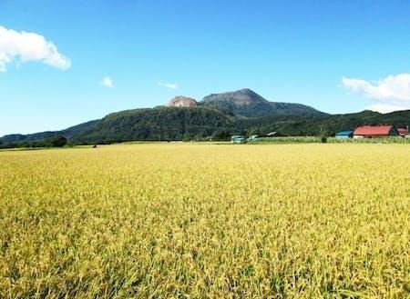秋には稲穂が織りなす金色の絨毯