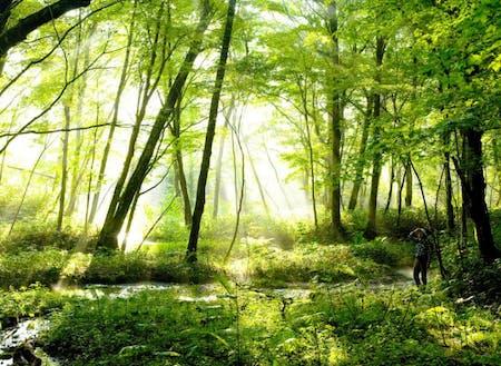 ポロト自然休養林に広がる湿原。春になるとバードウォッチングや山菜取り、夏はキャンプ、秋は紅葉など、多くの人が訪れる。毎日のように散策をする地元の愛好家によって大切に守られてきた。