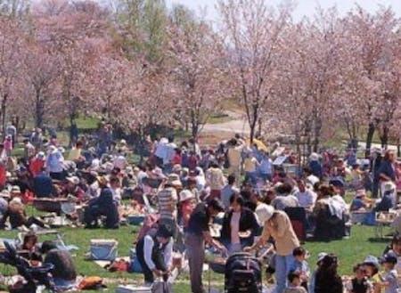 2019年5月6日(月)は「市民桜まつり」が開催されます。