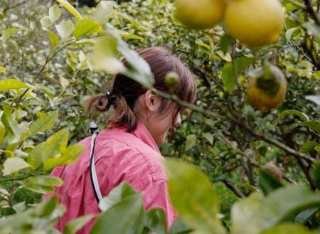 「看護師 x レモン農家」複数の収入源を持つことで経済的な自立が実現できます